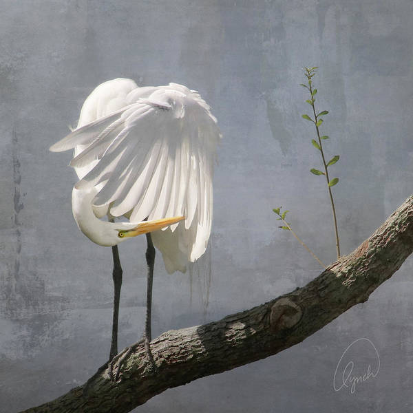 Photograph - White Egret by Karen Lynch
