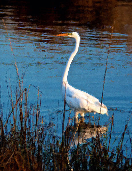 Wall Art - Photograph - White Egret Portrait by Kathi Isserman