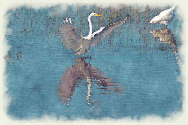 Photograph - White Egret Wings Spread In Water - Paintography by Dan Friend