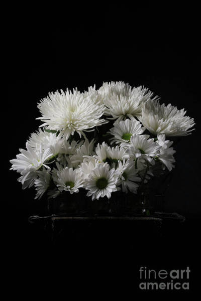 Photograph - White Flowers Over Black by Edward Fielding