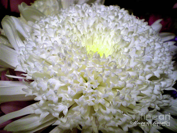 Photograph - White Flowers W2 by Monica C Stovall