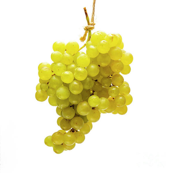Wall Art - Photograph - White Grapes On A White Background by Bernard Jaubert