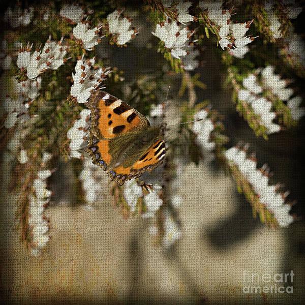 Digital Art - White Heather And Butterfly by Liz Alderdice