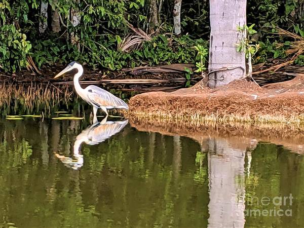 Wall Art - Photograph - White Heron by Julie Pacheco-Toye