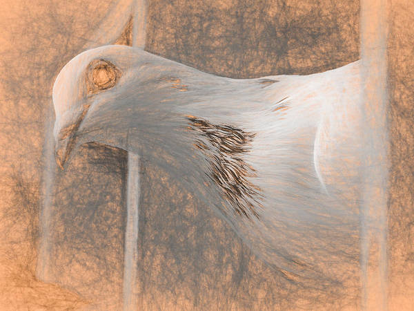 Photograph - White Homing Pigeon Da Vinci by Don Northup