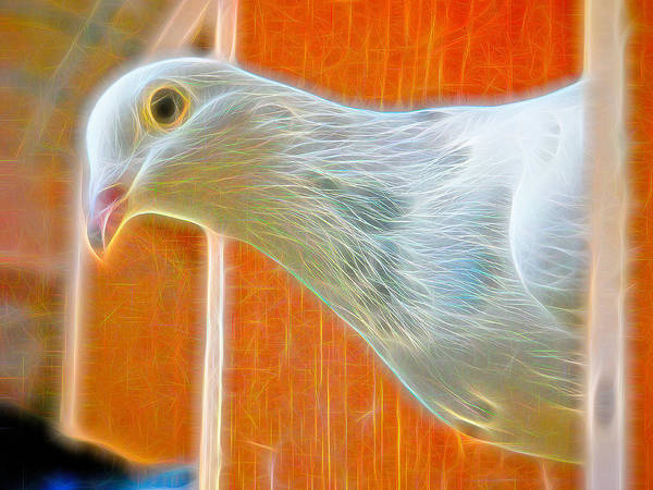 Photograph - White Homing Pigeon Fibers by Don Northup