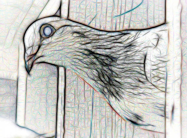 Photograph - White Homing Pigeon On White by Don Northup