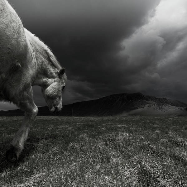 Wall Art - Photograph - White Horse At Night In Landscape by Johann S. Karlsson