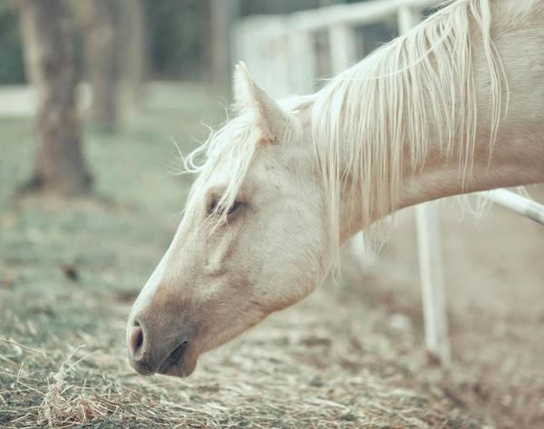 Wall Art - Photograph - White Horse by Dof-photo By Fulvio