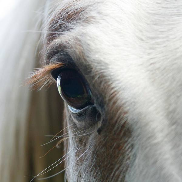 Wall Art - Photograph - White Horse Eye by Doug88888