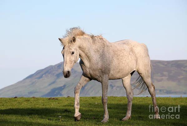 White Horse Photograph - White Horse Portrait by Targn Pleiades