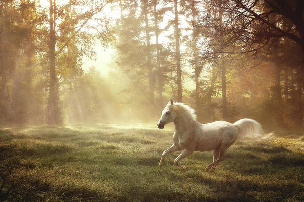 Wall Art - Photograph - White Horse Running by Janneo