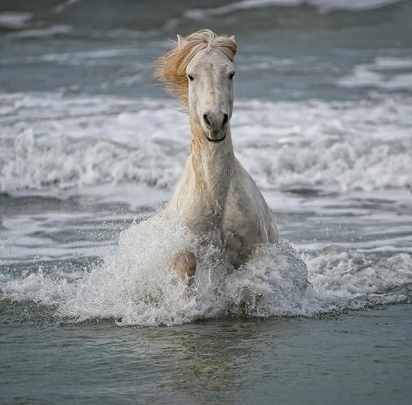 Determination Photograph - White Horse  Running Out Of The Waves by Annie Katz