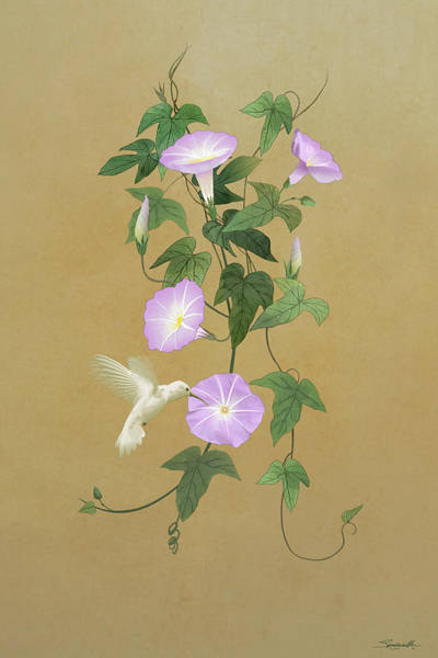 Wall Art - Digital Art - White Hummingbird And Morning Glory Vine by Spadecaller