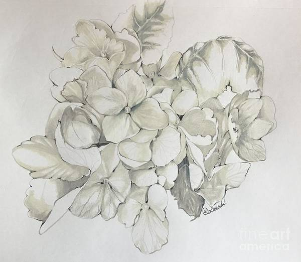 Drawing - White Hydrangea Detail by Laurel Adams