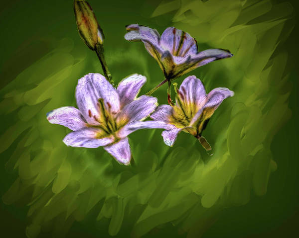 Digital Art - White Lillies On Green #i4 by Leif Sohlman