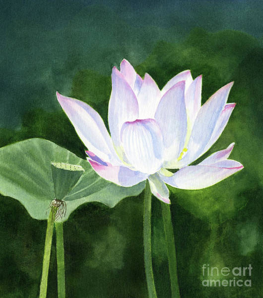 Lotus Seed Wall Art - Painting - White Lotus Blossom With Dark Abstract Background by Sharon Freeman
