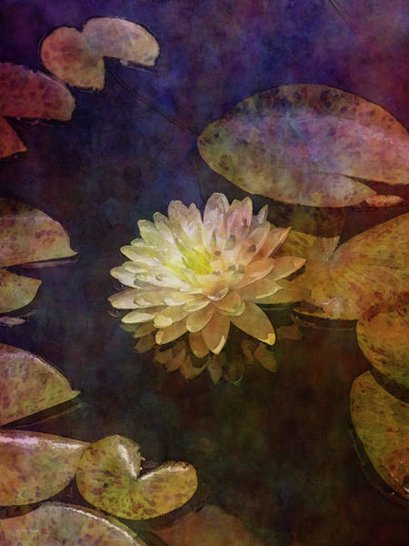 Photograph - White Lotus Lily Pond 2938 Idp_2 by Steven Ward