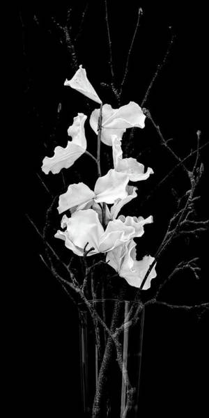 Photograph - White On Black by Thomas Hall