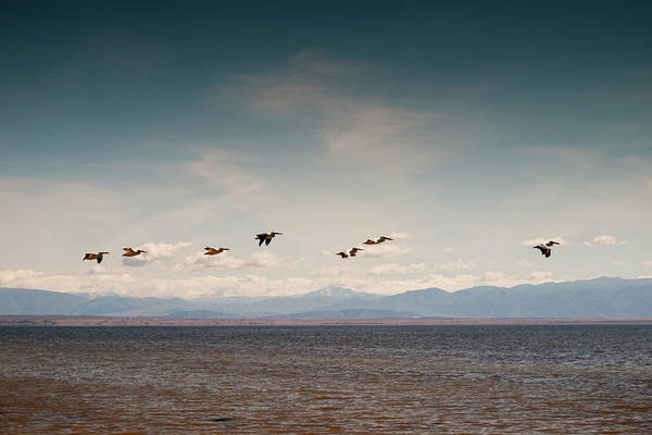 Pelican Wall Art - Photograph - White Pelicans by Eric Lowenbach