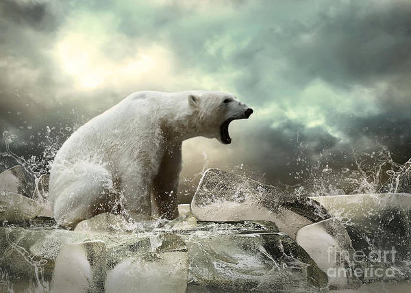 Wall Art - Photograph - White Polar Bear Hunter On The Ice In by Andrey Yurlov