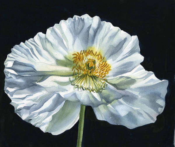 Painting - White Poppy For Peace by Alfred Ng