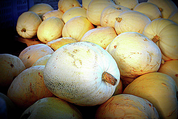 Photograph - White Pumpkins by Cynthia Guinn