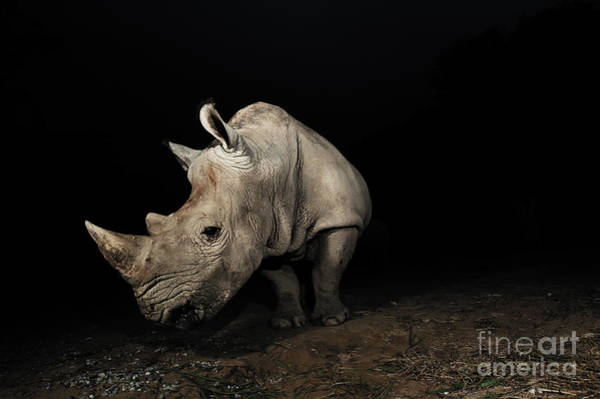 Beauty In Nature Wall Art - Photograph - White Rhinoceros by Signature Message
