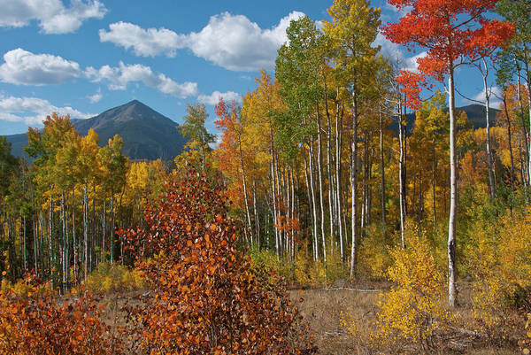 Photograph - White River National Forest Autumn Morning by Cascade Colors