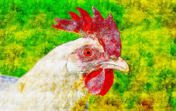 Wall Art - Drawing - White Rooster Watercolor Drawing by Hasan Ahmed