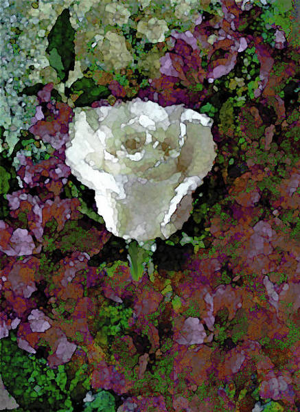Mixed Media - White Rose 211 by Corinne Carroll