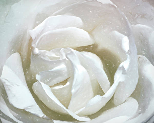 Digital Art - White Rose by Cindy Greenstein