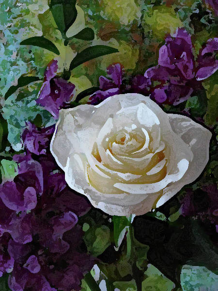 Mixed Media - White Rose by Corinne Carroll