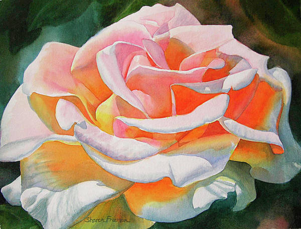 Realistic Flower Wall Art - Painting - White Rose With Orange Glow by Sharon Freeman