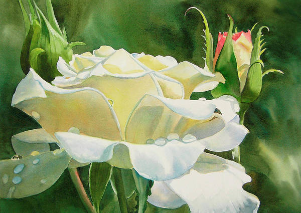 Freeman Wall Art - Painting - White Rose With Raindrops by Sharon Freeman