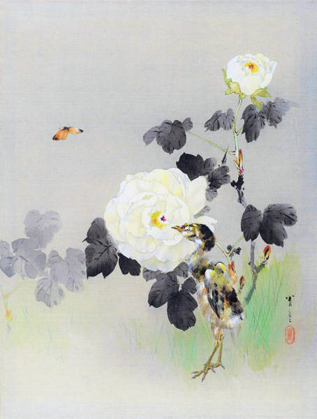 Wall Art - Painting - White Roses And Butterflies And Chicks - Digital Remastered Edition by Watanabe Seitei