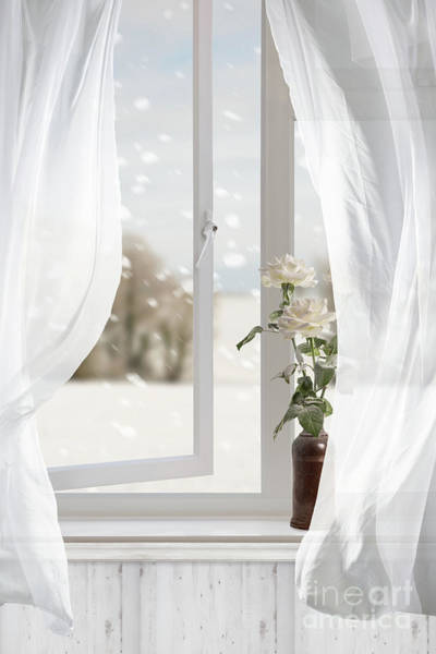 Wall Art - Photograph - White Roses In Winter Window by Amanda Elwell