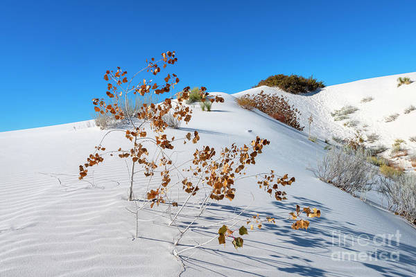 Wall Art - Photograph - White Sands Autumn by Mike Dawson