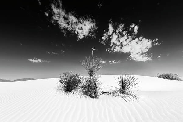Wall Art - Photograph - White Sands Impression - Monochrome by Melanie Viola