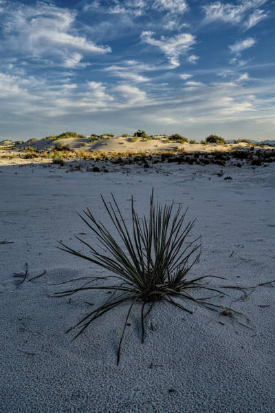 Photograph - White Sands New Mexico Intrigue  by Chance Kafka