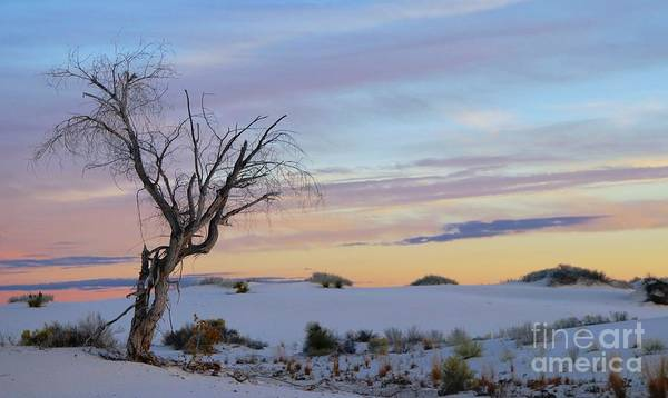 Photograph - White Sands, New Mexico by Marcia Lee Jones