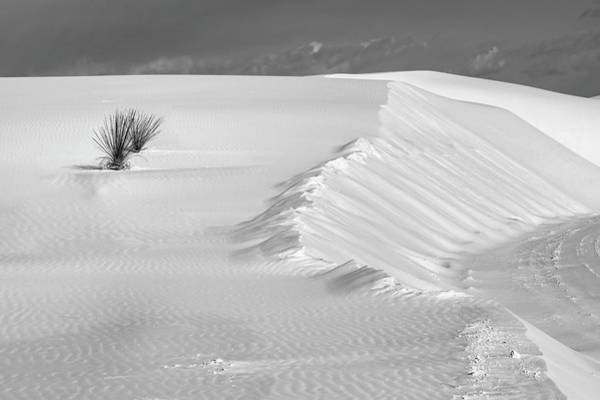 Photograph - White Sands Still Life Bw by Harriet Feagin