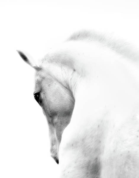 Nature Photograph - White Stallion Andalusian Horse Neck by 66north