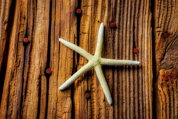 Wall Art - Photograph -  White Star On Old Boards by Garry Gay