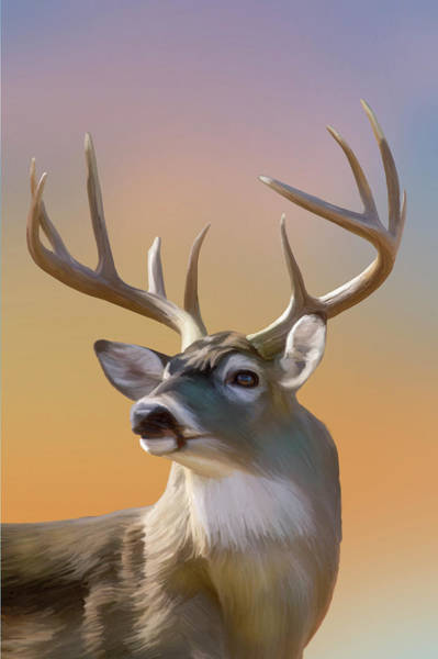 Digital Art - White-tail Buck In Golden Light by Mark Miller