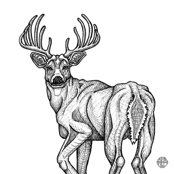 Drawing - White Tailed Buck by Amy E Fraser