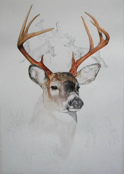 Mixed Media - White Tailed Deer 2 by Barbara Keith