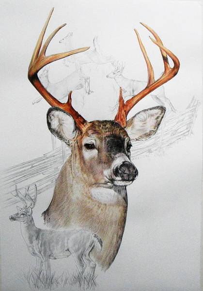 Mixed Media - White Tailed Deer 3 by Barbara Keith