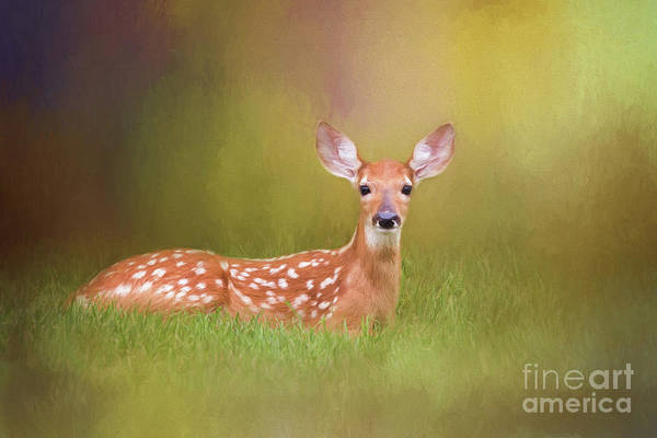 Wall Art - Digital Art - White Tailed Deer Fawn by Sharon McConnell