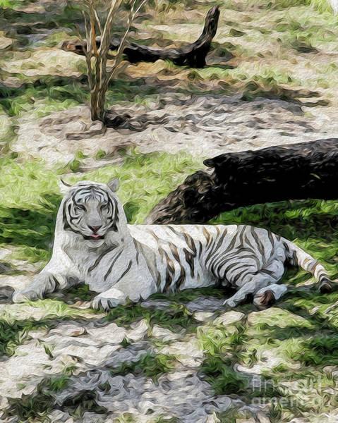 White Tiger At Rest Art Print